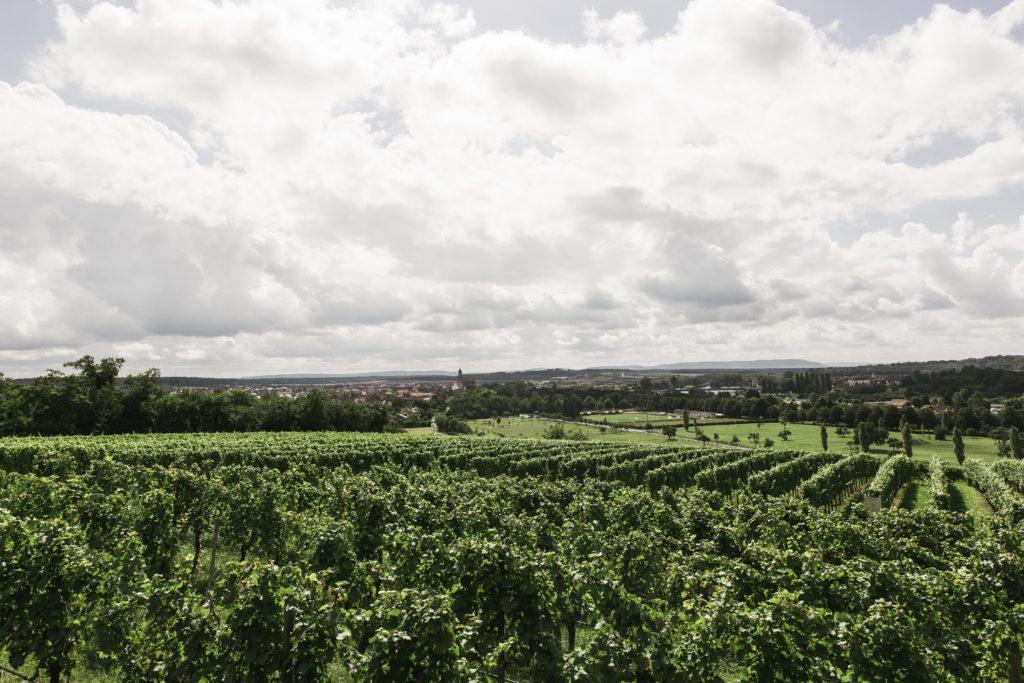 vignes dans le bordelais